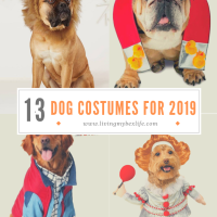 13 Hilarious Halloween Dog Costumes for 2019