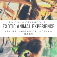 Orlando Adventure: Exotic Animal Experience